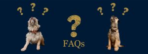 Harvey & Hugo FAQs banner